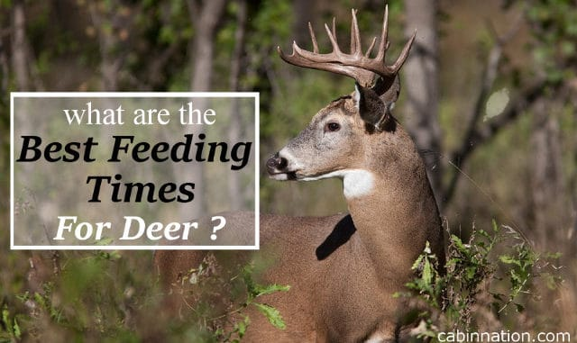 what are the best deer feeding times