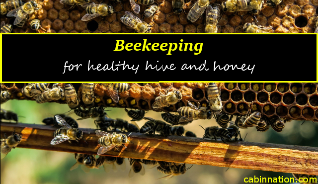 healthy hive and honey beekeeping